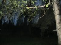 Tree spirits?
